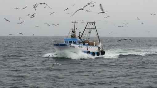 """Decreto Legge 'Rilancio': Coldiretti """"Bene estensione di misure a sostegno del settore ittico"""""""