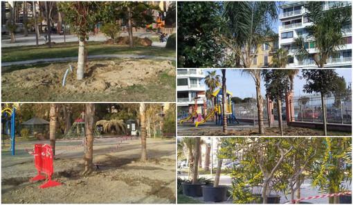 """Ventimiglia: prosegue la piantumazione degli alberi ai Giardini T.Reggio, Campagna """"Un luogo che stiamo riqualificando e su cui abbiamo investito molto"""" (Foto)"""