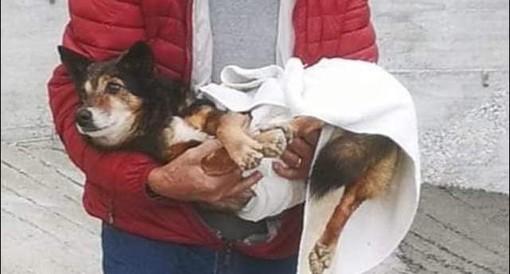 Taggia: raccolta fondi per salvare il cagnolino Artù, attivato conto per gestire le donazioni