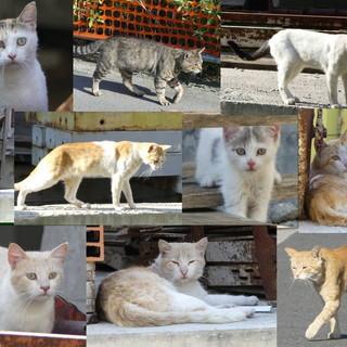 Arma di Taggia: sabato 29 febbraio raccolta cibo al Petstore Conad per l'associazione Lega del Gattino