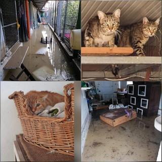 Alluvione Ventimiglia: i ringraziamenti della LNDC ai cittadini che si sono adoperati per gli animali, al via raccolta fondi