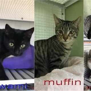 Enpa di Sanremo: quattro bellissimi gattini aspettano di essere adottati