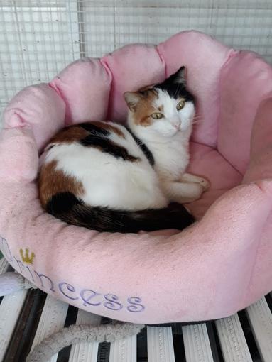 Enpa di Sanremo: un'adozione del cuore per la gattina Stregatta