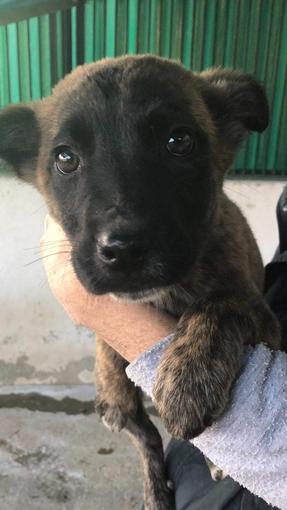 Sanremo: la cucciola Shaolin vi aspetta al Rifugio Enpa