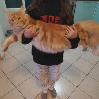 Sanremo: il gatto Salem è stato trovato, i ringraziamenti della sua famiglia