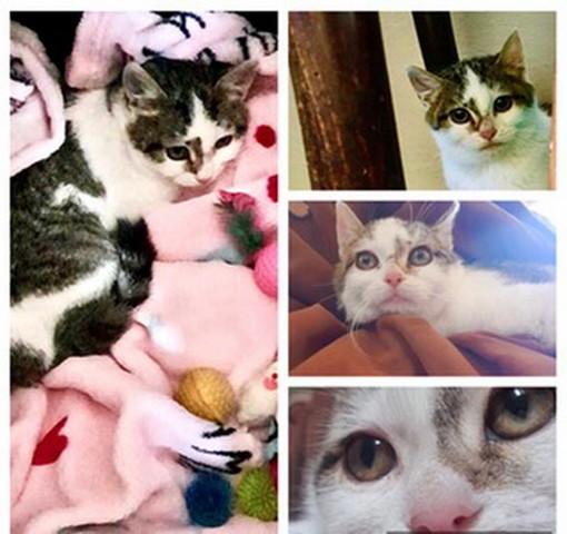 Arma di Taggia: la gattina Spot aspetta di essere adottata