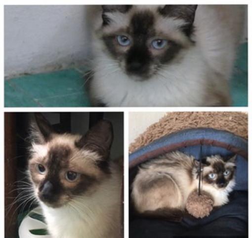 Arma di Taggia: la gattina Sissi aspetta di essere adottata