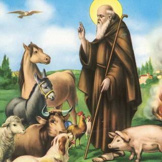 """Festa del Patrono degli animali Sant'Antonio, Coldiretti: """"Per il covid in aumento le adozioni di animali domestici"""""""