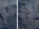 Polpi e sogliole, gli invisibili nel mare di Cervo. Foto e video di Marcello Nan