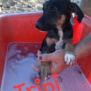 Sanremo: la cagnolina Trini è in cerca di una nuova famiglia