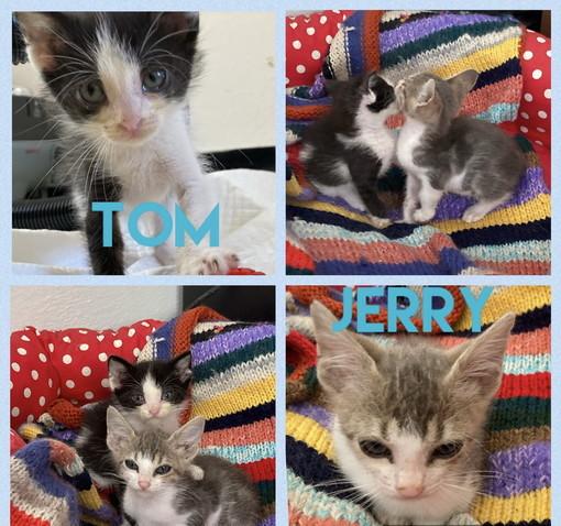 Arma di Taggia: Tom e Jerry due bellissimi gattini cercano casa