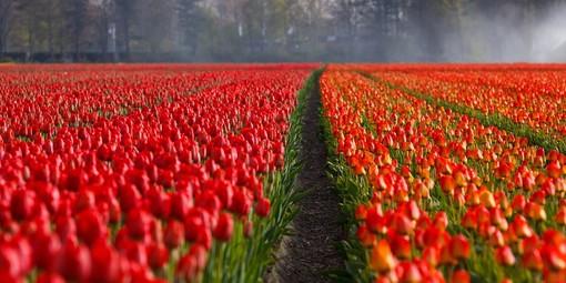 Bulbi da fiore: un'opportunità per un giardino sempre fiorito