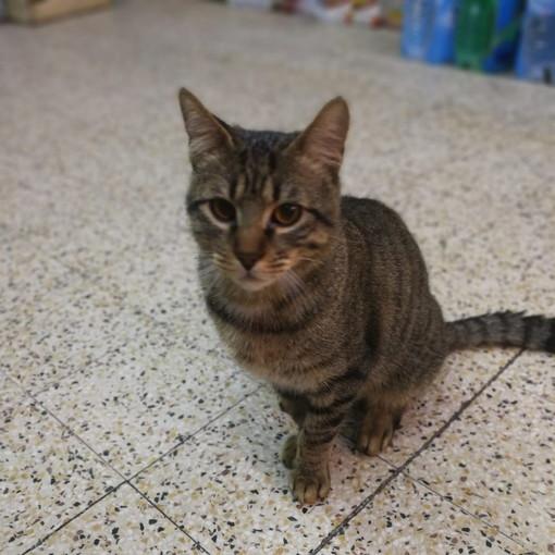 Sanremo: il gattino Tigro è stato adottato