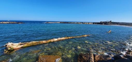 Sanremo: oggi ai bagni lido trovato un tronco di oltre venti metri tirato fuori dall'acqua dai proprietari dello stabilimento (foto)