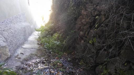 Imperia: incuria nella mulattiera comunale di via Ruggetto a Barcheto, l'appello dei residenti all'amministrazione (Foto)