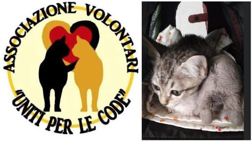"""Cure difficili per una gattina di Imperia, Uniti per le Code denuncia """"i veterinari non hanno un codice deontologico?"""""""