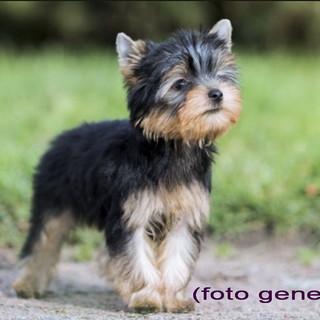 Sanremo: zona San Romolo è stato trovato un cagnolino, si cercano i proprietari