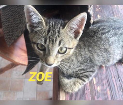 Riva Ligure: la gattina Zoe aspetta di essere adottata